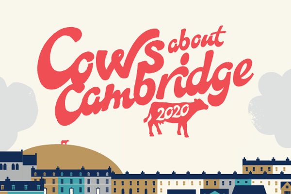 Cows about Cambridge